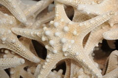 Starfish. A collection of tan coloured Starfish Royalty Free Stock Photo