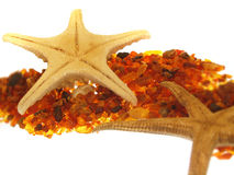 Starfish. Collage Stock Photography