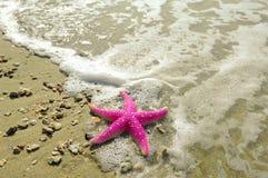 Free Starfish Royalty Free Stock Photo - 14327385