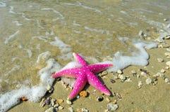 Free Starfish Royalty Free Stock Photos - 14327478
