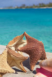 Starfish Stock Photography
