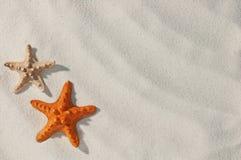 Free Starfish Stock Photo - 14844980