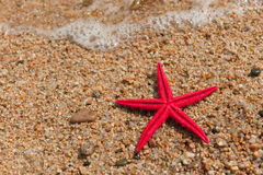 Starfish Stock Photos