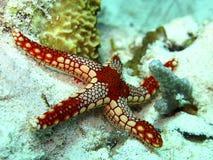 Starfish Stockbilder