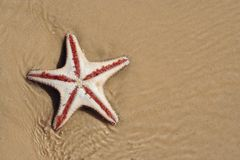 Starfish. Image of a starfish on a tropical beach Royalty Free Stock Photography