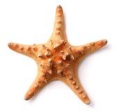 Starfish. The Starfish on white background Stock Photo