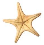 Starfish. The starfish on white background Stock Photography