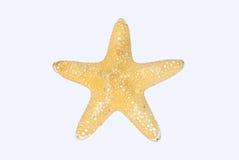 Starfish. One big starfish from ocean Stock Photo