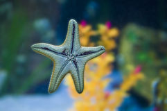 Starfish Stockfotografie