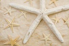 Starfish Stock Photos
