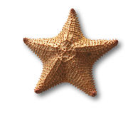 Starfish. Isolated on white with shadow and clipping path Royalty Free Stock Images