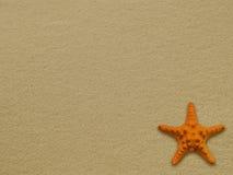Starfish. On a wet beach sand Stock Photo