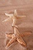 starfish 2 песка пляжа Стоковая Фотография