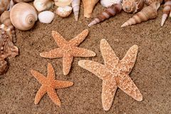 Starfish 2 Royalty Free Stock Photos