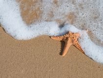 Starfish. In sand on the beach stock images