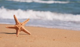 Starfish. In sand on the beach royalty free stock photo