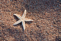 Starfish. Lying on coarse sand Royalty Free Stock Photos