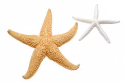 Starfish Foto de Stock Royalty Free