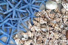 Starfish. In blue color and shell on a table Stock Image