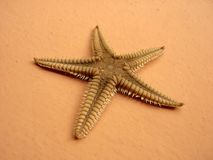 Starfish. A single starfish on a peach background Royalty Free Stock Photo