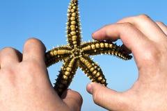 Starfish Foto de Stock Royalty Free