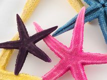 Starfish. Against white background Royalty Free Stock Photos