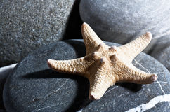 Starfish. Stock Photos