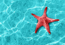 Starfish. In blue water with light reflection Royalty Free Stock Photos