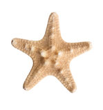 Starfish. Small starfish isolated over a white background Stock Photo