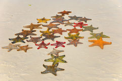 Starfish. Zanzibar, Tanzania starfish or sea stars are echinoderms belonging to the class Asteroidea. The names starfish ; ; ; and sea star essentially refer to Stock Images