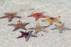 Starfish. Zanzibar, Tanzania starfish or sea stars are echinoderms belonging to the class Asteroidea. The names starfish ; ; ; and sea star essentially refer to Stock Photo