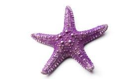 Free Starfish Stock Photography - 28165182