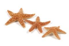 Starfish. Photo of Starfish Stock Photography