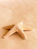 Starfish. On old paper,,,,great for backgrounds royalty free stock photography