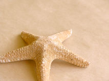 Starfish. On old paper,,,,great for backgrounds stock photos