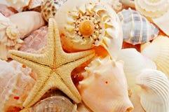 Starfish Lizenzfreie Stockbilder