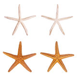 Starfish. Isolated on white background Stock Photography