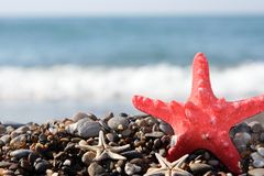 Starfish. On a background of the dark blue sea Royalty Free Stock Photo