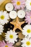 image photo : Starfish