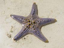 Starfish Lizenzfreie Stockfotografie