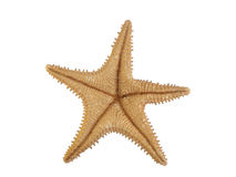 Starfish. On a white background Royalty Free Stock Photo