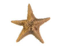 Starfish. On a white background Stock Photos