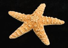 Starfish. Fron oceans deep water on black background stock photos