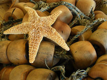 starfish Стоковые Фотографии RF