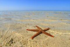 Starfish1 Fotografia Stock Libera da Diritti