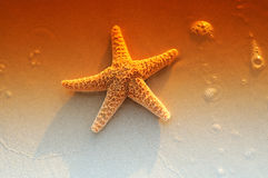 Starfish. On A Beach At Sunrise In The Surf Royalty Free Stock Photography