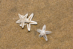 Free Starfish Royalty Free Stock Photography - 4884357