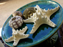 Starfish. Plate with white starfish on natural background stock photos