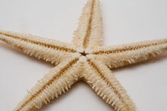 Starfish. On a white background stock photos