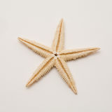 Starfish. On a white background stock image